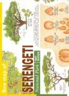Serengeti Nemzetil Park térkép - Maco Editions
